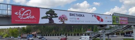 Выставка карпов кои в Украине